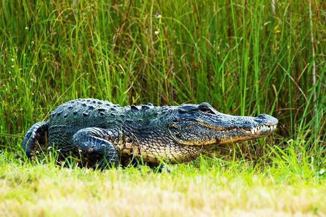 Tour durch die Everglades