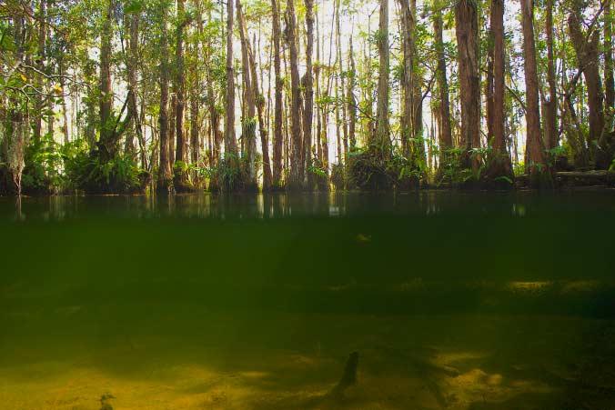 Alligatorenloch unter Wasser