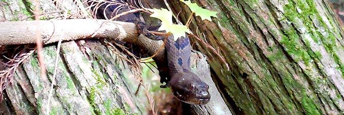 Schlange im Alligatorenloch