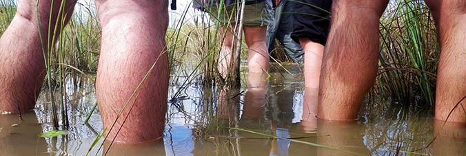 Everglades Wanderung