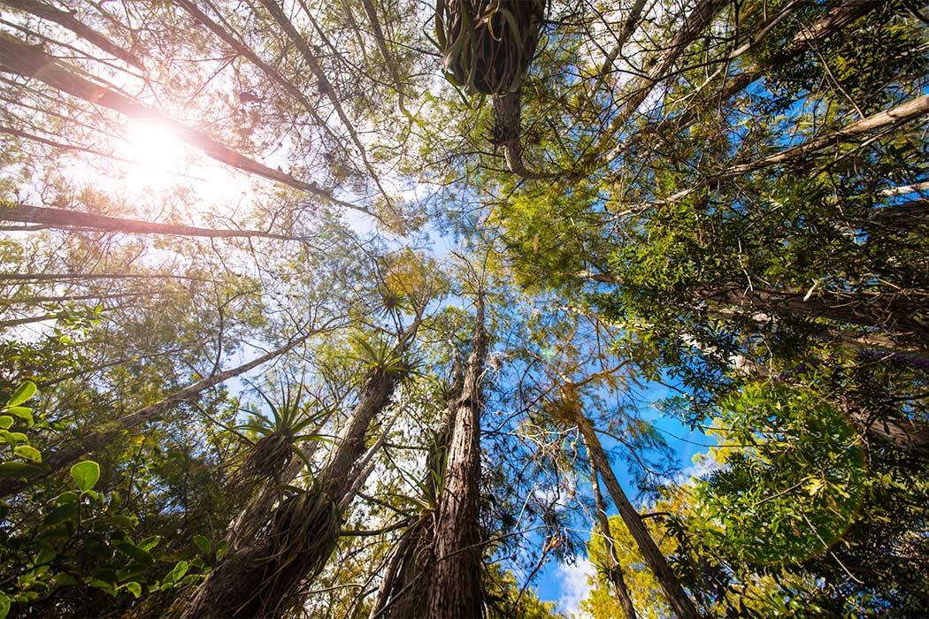 Wälder Der Erde