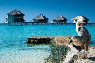 Malediven Lagune mit Graureier