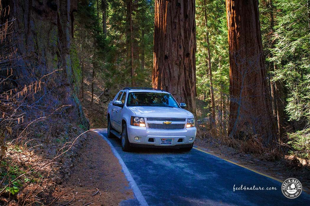 Road Trip USA-Sequoia