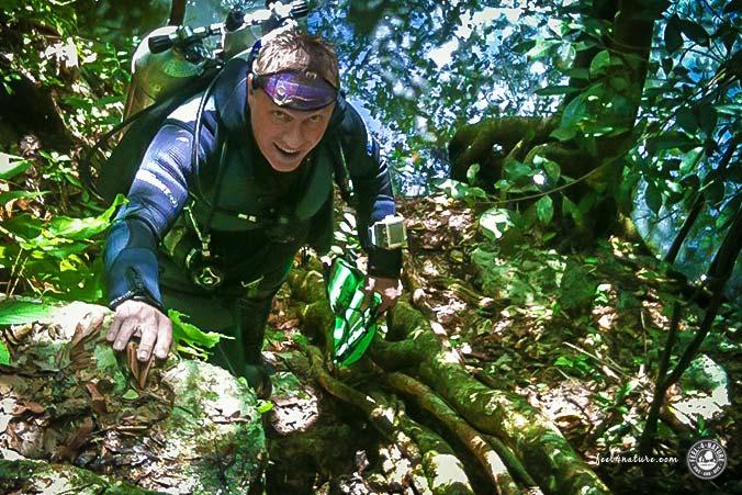 Stefan Ullrich Dschungel
