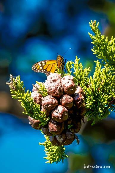 Schmetterling - Highway #1