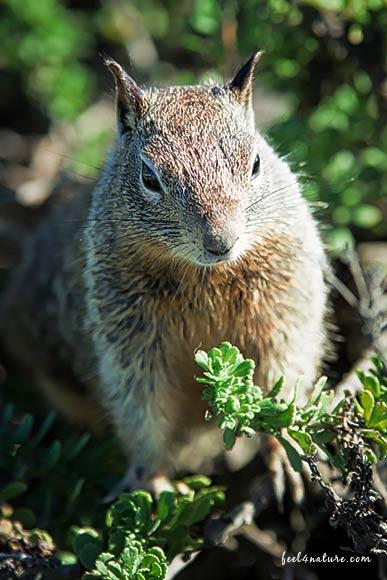 Eichhörnchen - Highway #1