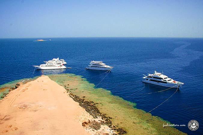 Tauchsafari Ägypten