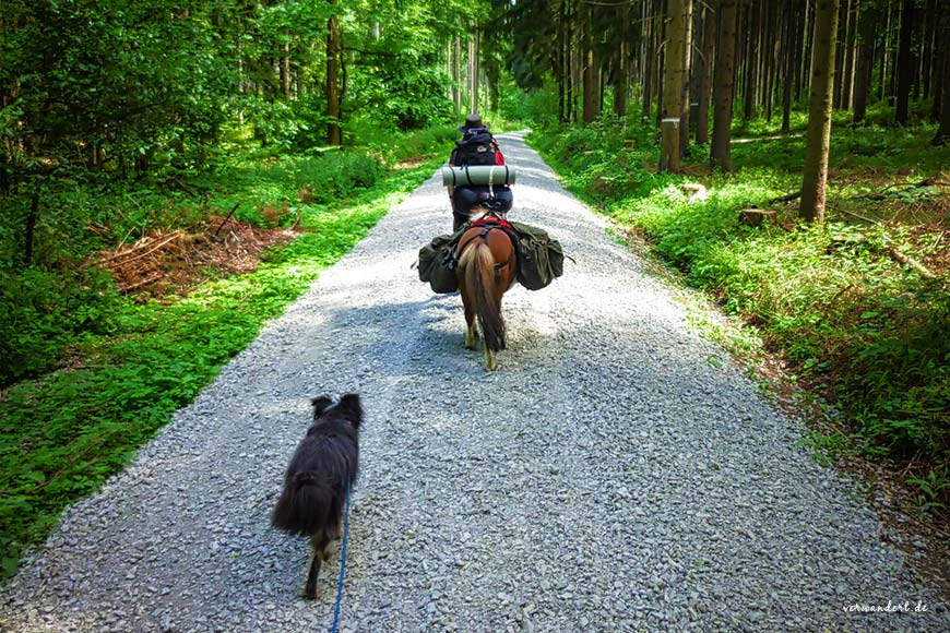 Wandern mit Pony und Hund