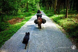 Verwander.de - Wandern mit Hund & Pferd