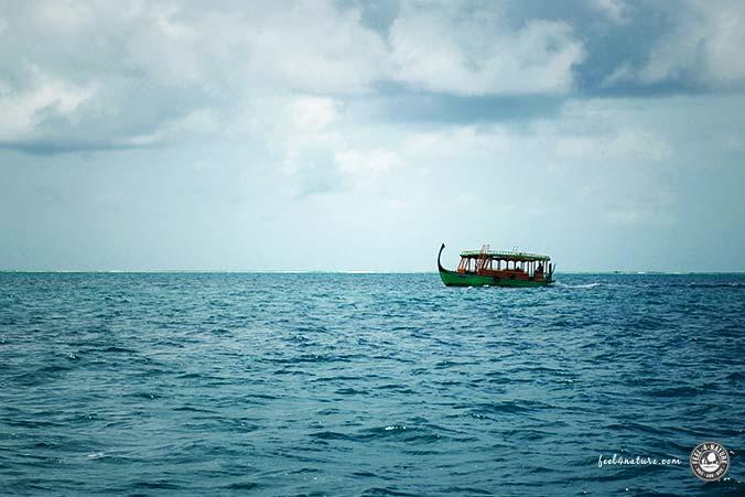 Dive & Sail - Dhoni