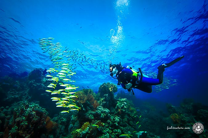 Unterwasserwelt in Ägypten