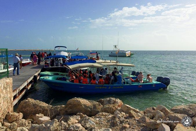 Walhai Tour Punta Sam