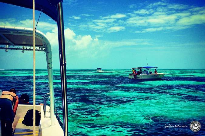 Walhai Tour Lagune