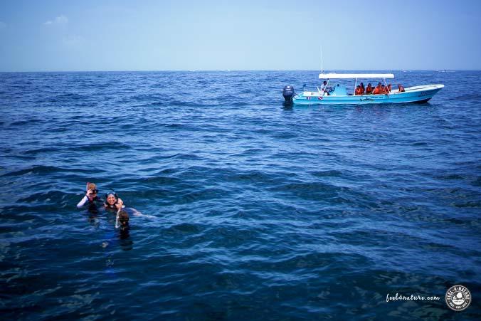 Schnorchler Walhai Tour