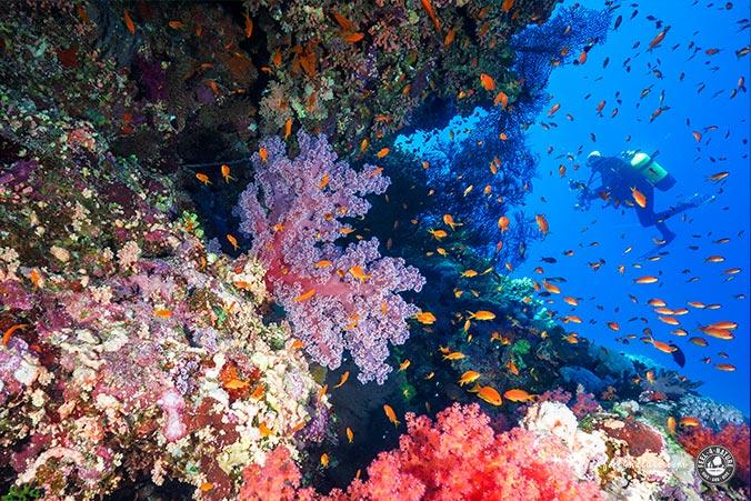 Brother Islands Korallen
