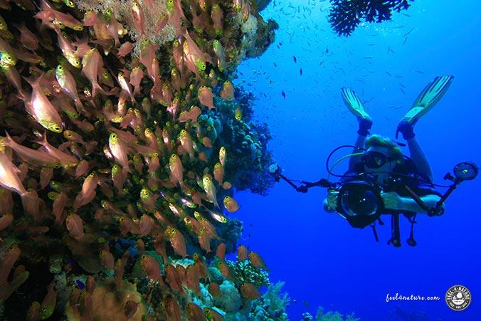 Tarieren Unterwasserfotografie