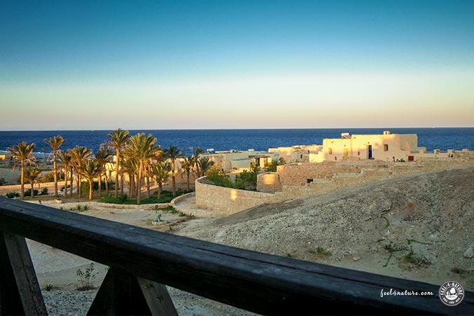 Meerblick The Oasis Resort