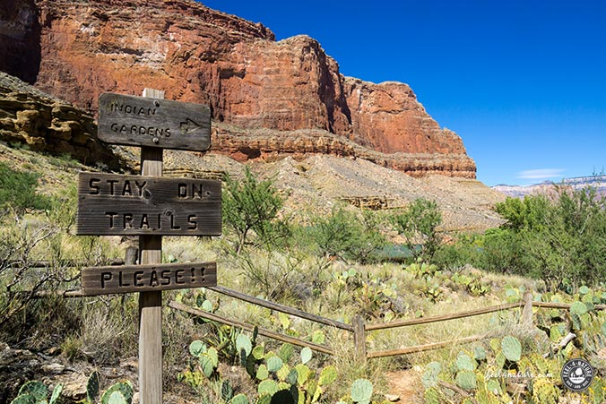 Bright Angel Trail - Kakteenfeld