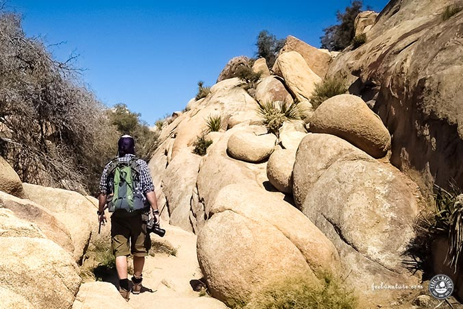 feel4nature - Joshua Tree NP