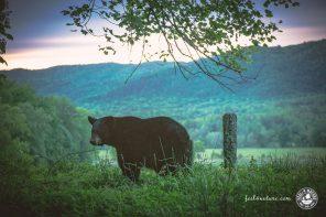 Im Great Smoky Mountains Nationalpark den Bären auf der Spur