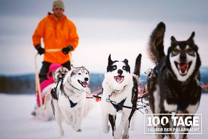 Schlittenhunde Finnland