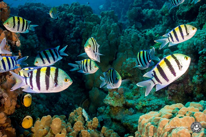 St.Johns Bunter Fischschwarm