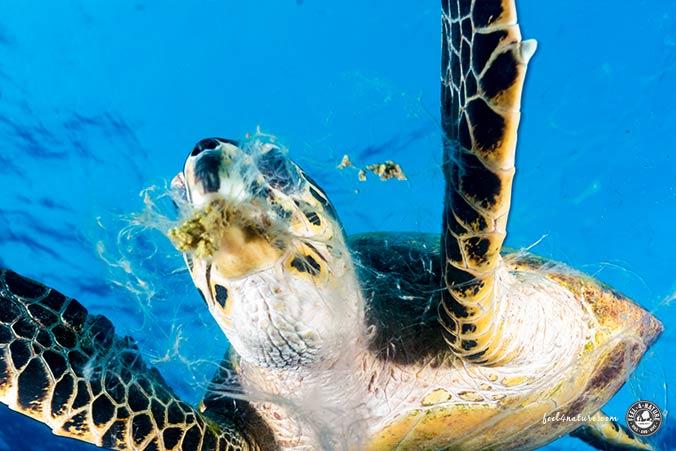 St.Johns Tauchsafari Schildkröte