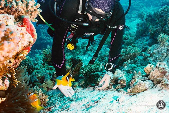 Tauchsafari Ägypten Nemo