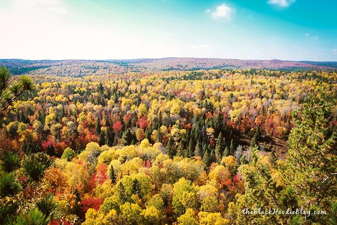 Algonquin Park Wälder