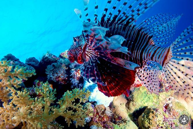 Unterwasserfotografie Bearbeitung