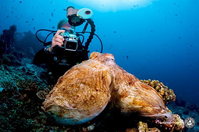 Unterwasserfotografie Kompaktkamera