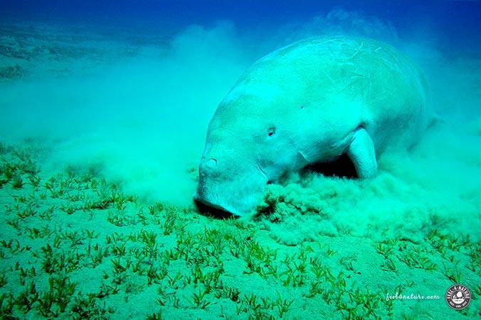 Unterwasserfotografie Licht