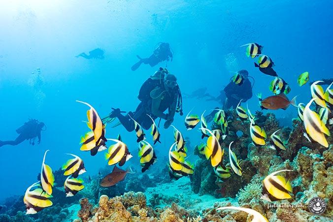 Unterwasserfotografie Trick  Lichtquelle