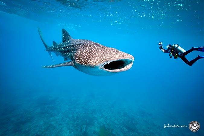 Unterwasserfotografie Respekt