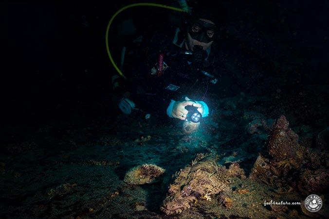 Unterwasserfotografie Schwebeteilchen