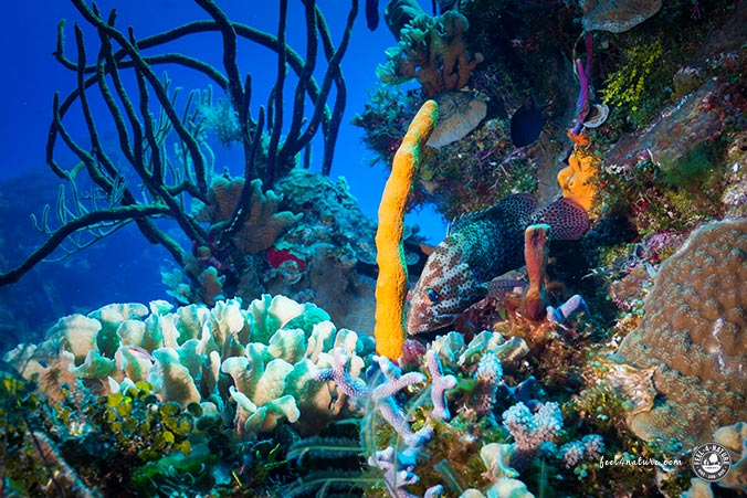 Tauchen Cozumel Riffe