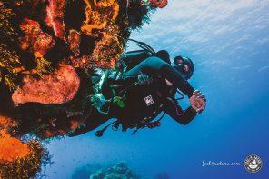Auf Cozumel Tauchen mit Volker vom Aquamarinas Divecenter