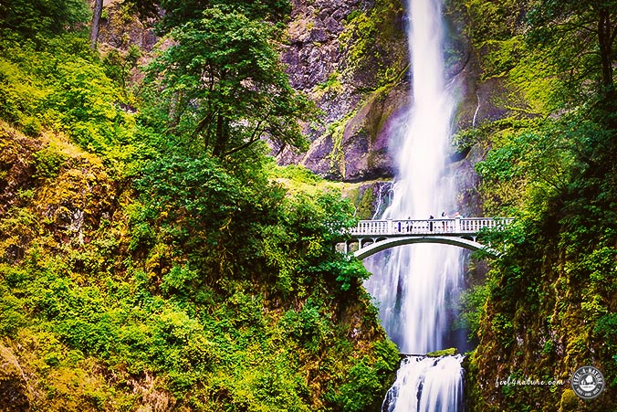 Pacific Northwest Waterfall