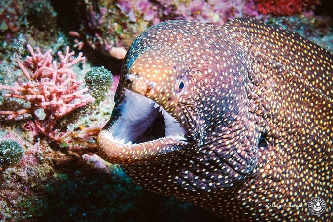Unterwasserwelt Südostasien