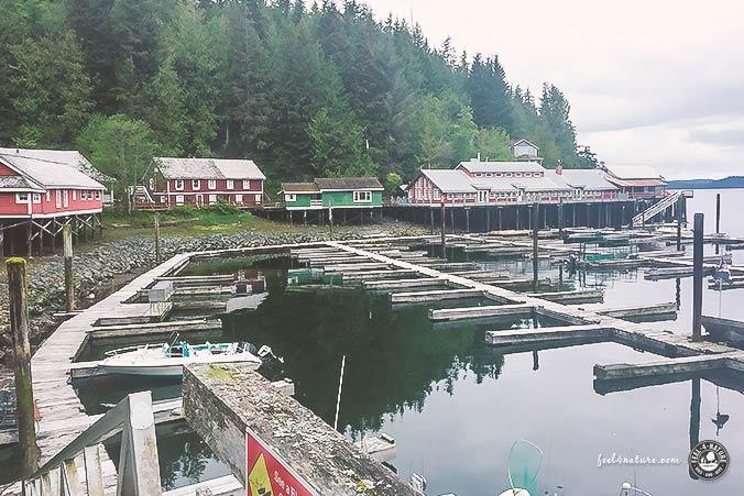Telegraph Cove Camping