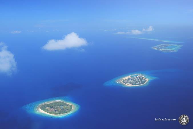 Malediven Atolle Tauchen