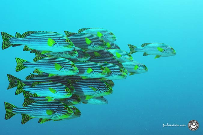 Malediven Fischreichtum