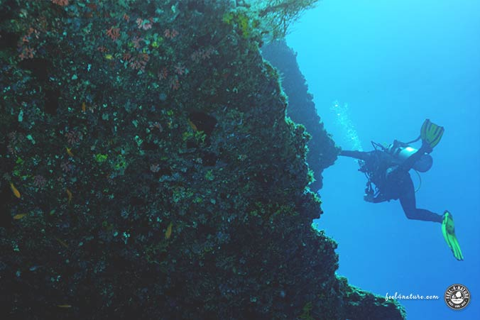 Malediven Riffhaken Tauchen
