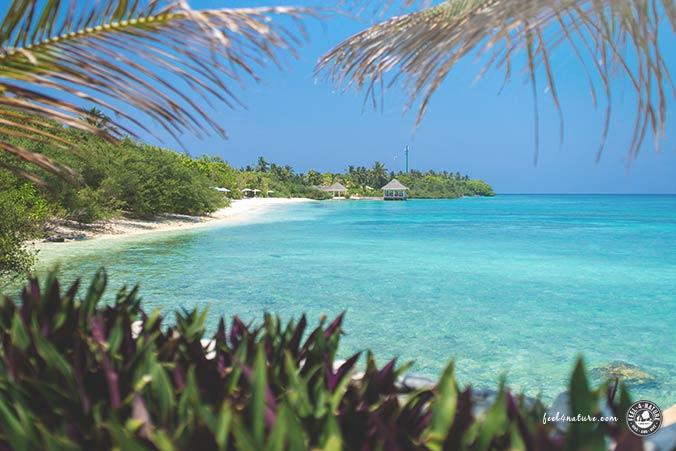 Malediven Tauchplätze