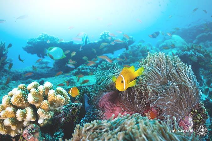 Malediven Thila