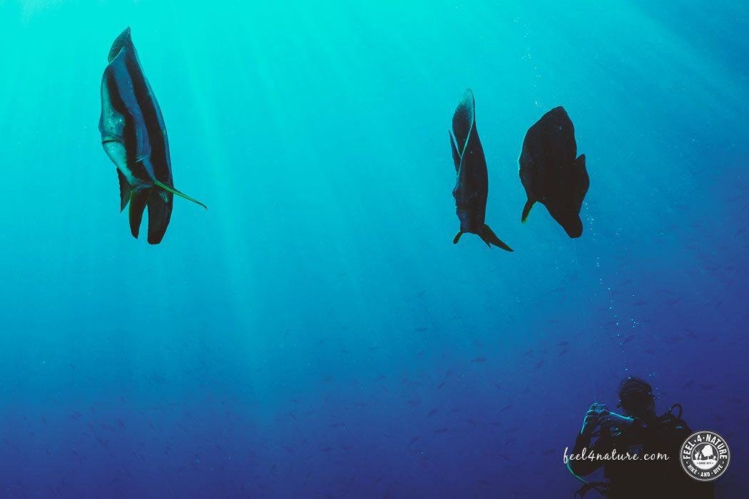 Malediven Tauchen