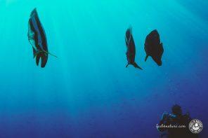 Tauchen Malediven, alles was Du als Anfänger wissen musst!
