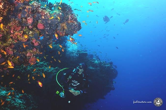 Tauchen Malediven Thila