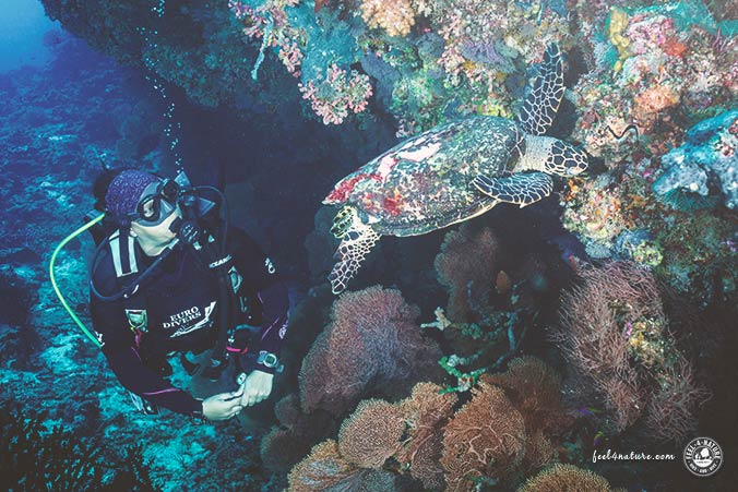Tauchen Süd Ari Atoll