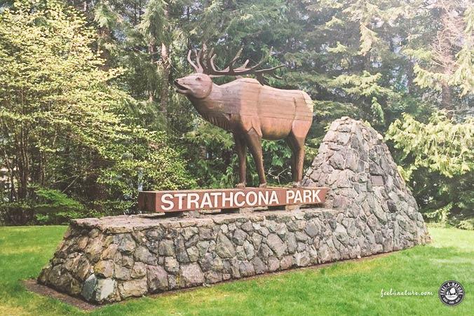 Elk Portal Vancouver Island